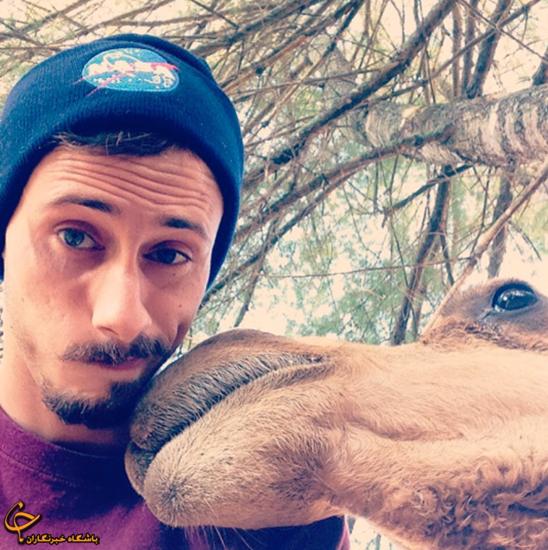 عکس سلفی با شتر