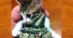 داعش به گربهها کمربند انتحاری میبندد!+عکس