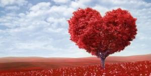 درخت عشق