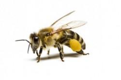 ۲۰ واقعیت شگفت انگیز عسل و زنبورهای آن