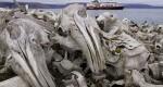 جزیرهای مملو از استخوان ماهیهای خاویار + عکس