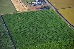 Cool-Patch-Pumpkins-corn-maze