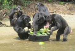 جزیرهای که ساکنین آن تنها میمونها هستند + عکس