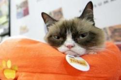 با گربه 100 میلیون دلاری آشنا شوید + عکس
