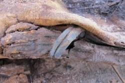کشف یک میلیون مومیایی جدید در مصر+عکس