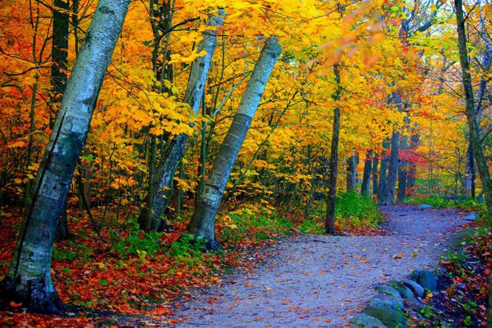 Beautiful pictures of autumn 14 عکس پاییز Fall Photos