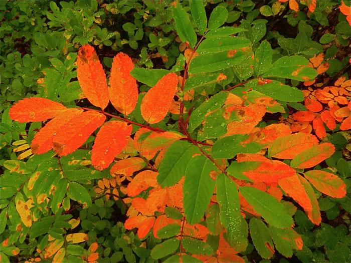 Beautiful pictures of autumn 16 عکس پاییز Fall Photos
