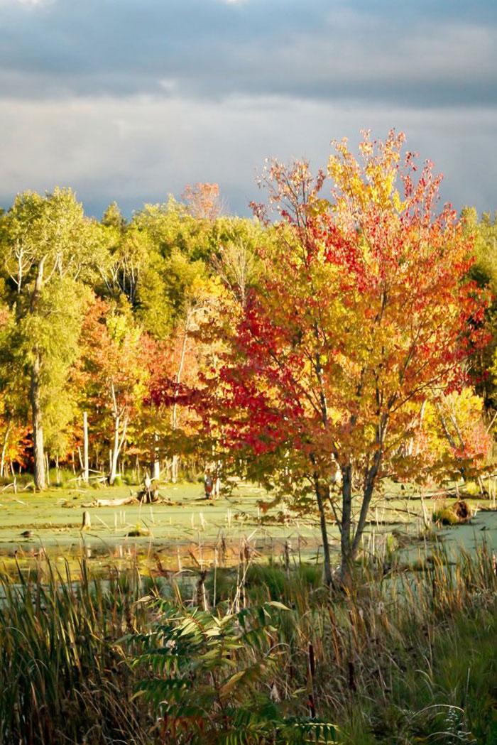 Beautiful pictures of autumn 5 عکس پاییز Fall Photos