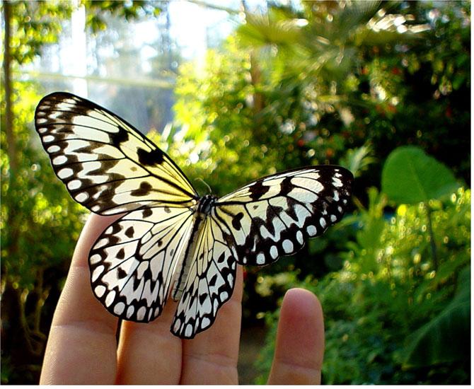 buterfly beautiful photo gallery 6 1 عکسهای جدید پروانه - تصویر پروانه