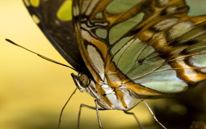 buterfly beautiful photo gallery 6 10 عکسهای جدید پروانه - تصویر پروانه