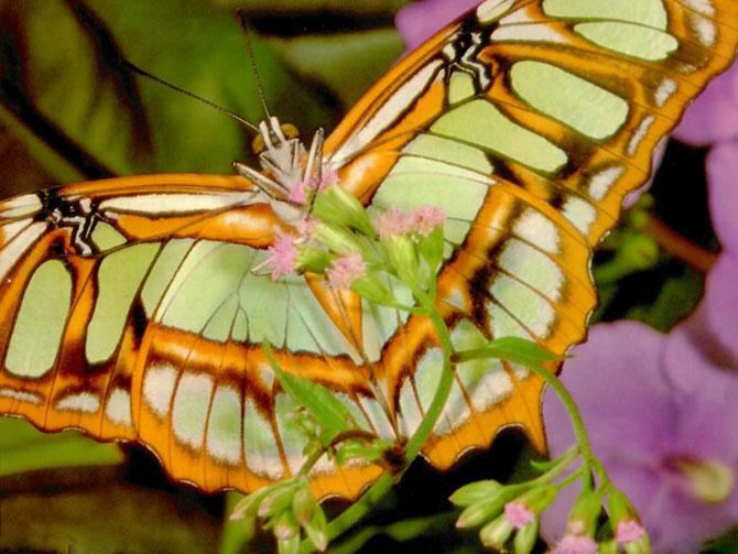 buterfly beautiful photo gallery 6 11 عکسهای جدید پروانه - تصویر پروانه