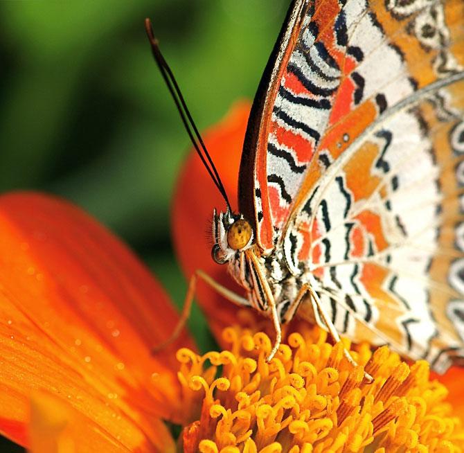 buterfly beautiful photo gallery 6 12 عکسهای جدید پروانه - تصویر پروانه