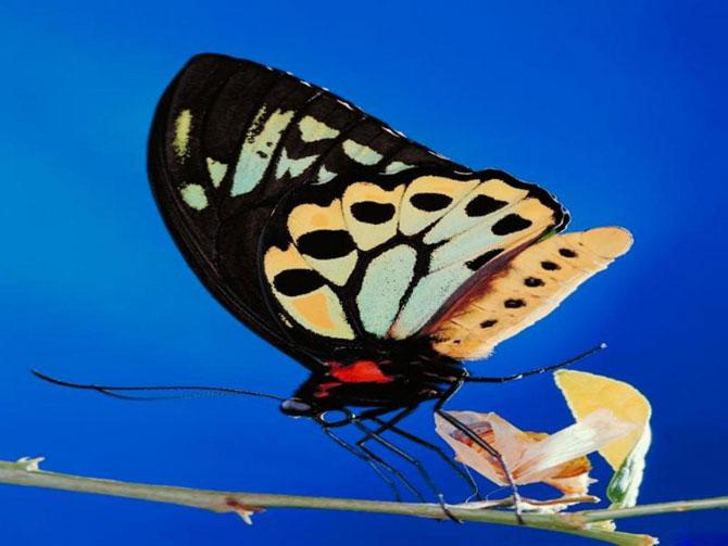 buterfly beautiful photo gallery 6 14 عکسهای جدید پروانه - تصویر پروانه