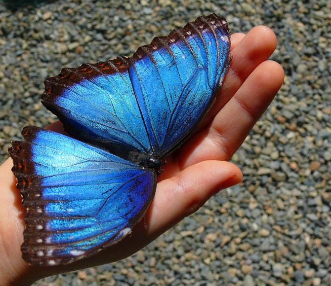 buterfly beautiful photo gallery 6 15 عکسهای جدید پروانه - تصویر پروانه