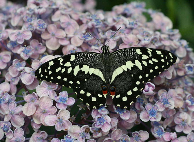 buterfly beautiful photo gallery 6 17 عکسهای جدید پروانه - تصویر پروانه