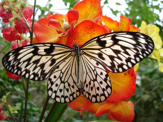 buterfly beautiful photo gallery 6 2 عکسهای جدید پروانه - تصویر پروانه