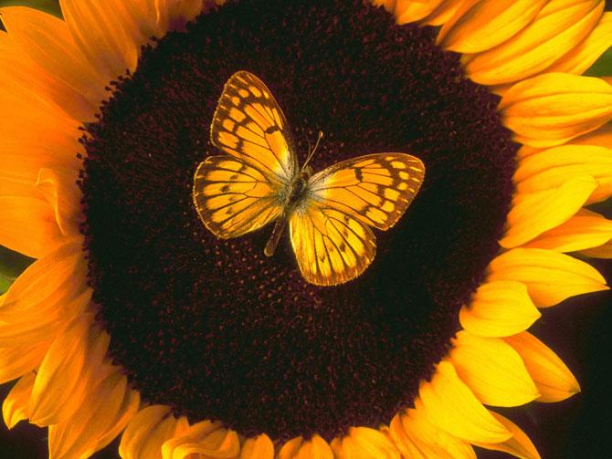 buterfly beautiful photo gallery 6 4 عکسهای جدید پروانه - تصویر پروانه