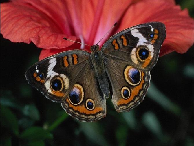 buterfly beautiful photo gallery 6 7 عکسهای جدید پروانه - تصویر پروانه
