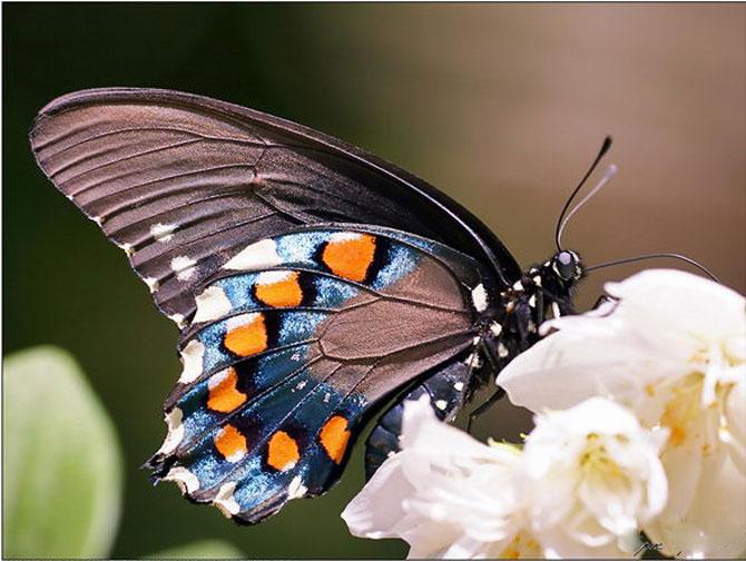 buterfly beautiful photo gallery 6 8 عکسهای جدید پروانه - تصویر پروانه