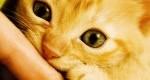 گالری عکس گربههای ناز و دوستداشتنی