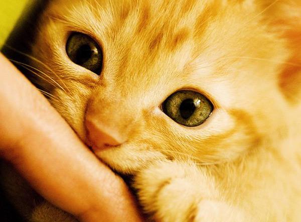 cute kitten 1 عکس های بامزه از بچه گربه های ناز و ملوس