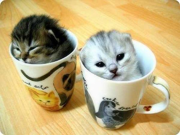 cute kitten 10 عکسای بامزه از بچه گربهای ناز و ملوس
