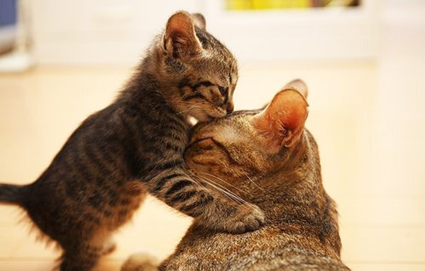 cute kitten 11 عکس های بامزه از بچه گربه های ناز و ملوس