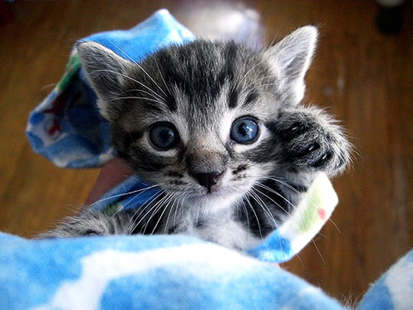 cute kitten 12 عکس های بامزه از بچه گربه های ناز و ملوس