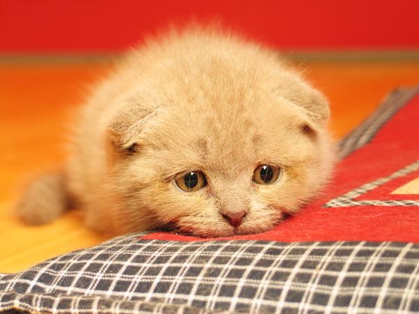 cute kitten 4 عکسای بامزه از بچه گربهای ناز و ملوس
