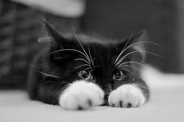 cute kitten 5 عکسای بامزه از بچه گربهای ناز و ملوس