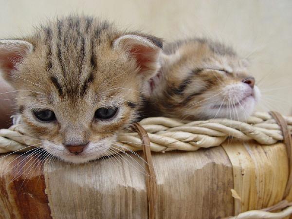 cute kitten 7 عکس های بامزه از بچه گربه های ناز و ملوس