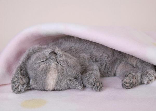 cute kitten 8 عکسای بامزه از بچه گربهای ناز و ملوس