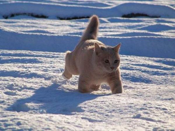cute kitten 9 عکسای بامزه از بچه گربهای ناز و ملوس