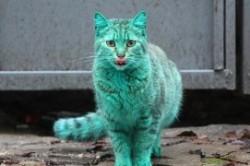 گربهای که یک کشور را به هم ریخت +عکس