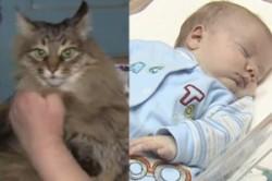 گربهای که جان نوزاد سرراهی را نجات داد+عکس