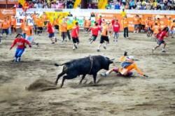 """""""انسان بازی"""" گاوها در کاستاریکا +عکس"""