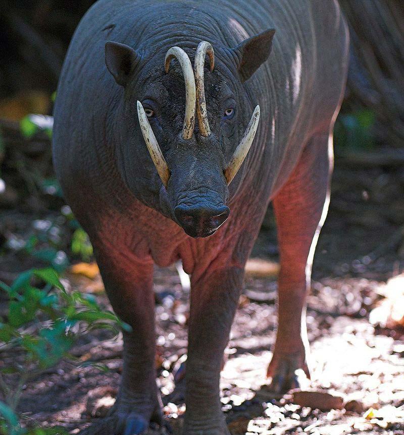 زشت ترین حیوانات 13