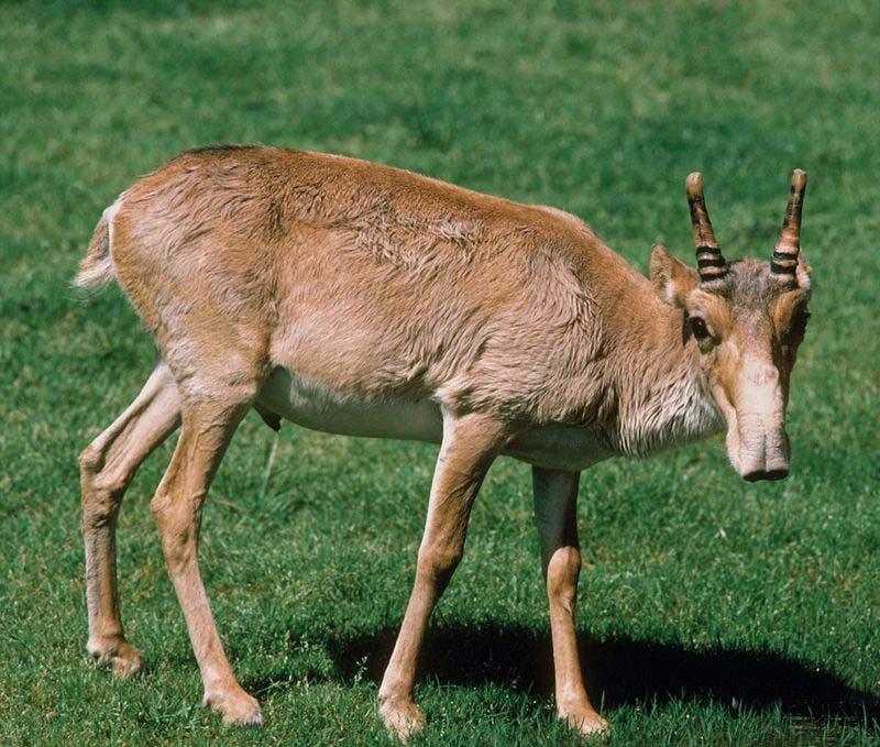 زشت ترین حیوانات 17