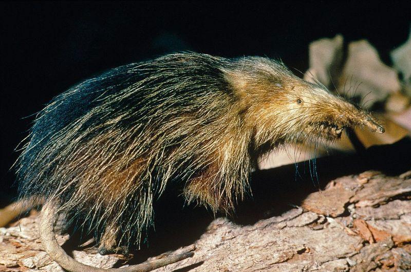زشت ترین حیوانات 19