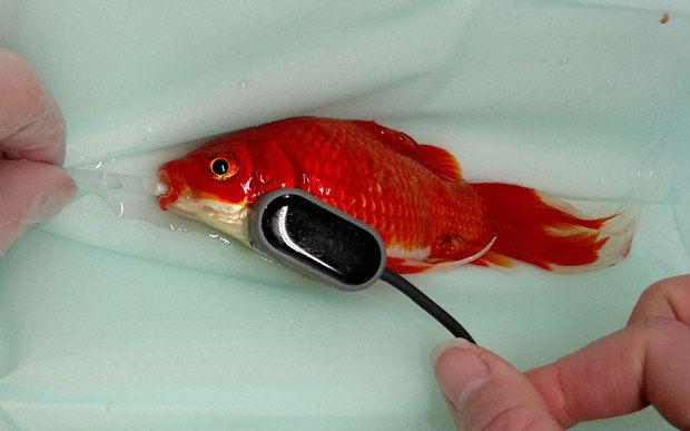 fish-surgery
