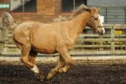 پیرترین اسب دنیا +عکس