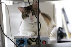 افزایش راندمان کاری با گربه بازی ! +عکس