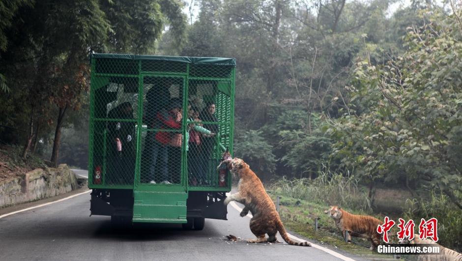 باغ وحش چین