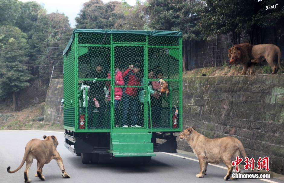 unique-zoo-experience3
