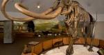 باتلاقی مملو از فسیلهای تاریخی / عکس