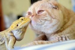 عکسهایی دیدنی از رفاقت حیوانات!