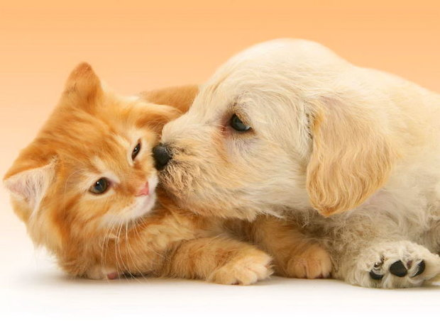 friendly-play-paws-lovely-8769-1100x806__700.jpg