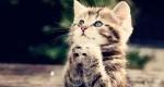 خانه سالمندان ویژه گربهها +عکس