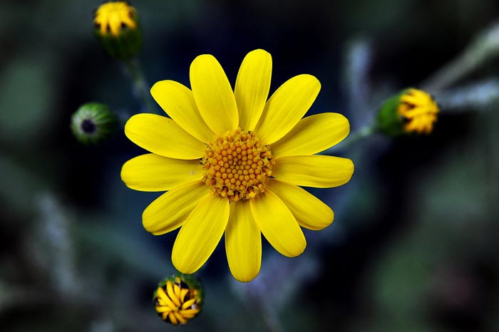 a024939518254102a گعکس گلهای زیبا و دیدنی