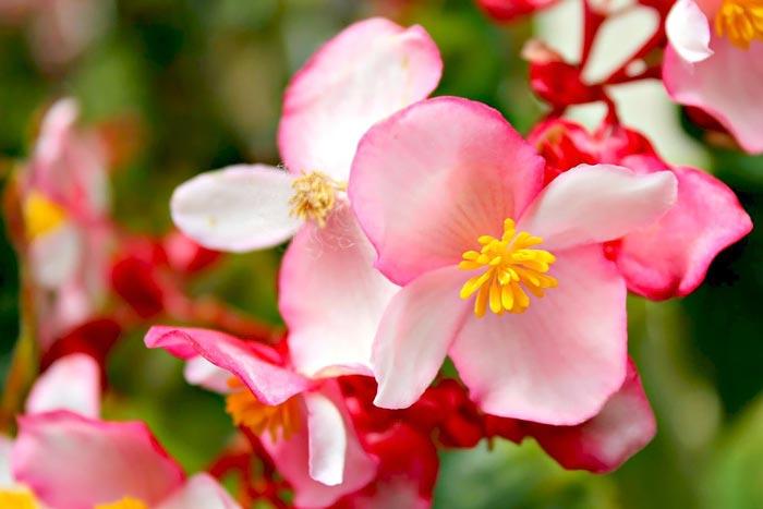 a047049518254102a گعکس گلهای زیبا و دیدنی